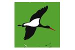 Helfen Sie der Stiftung Wälder für Morgen beim Schutz der Wälder in Deutschland